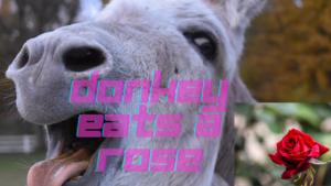 donkey eats a rose